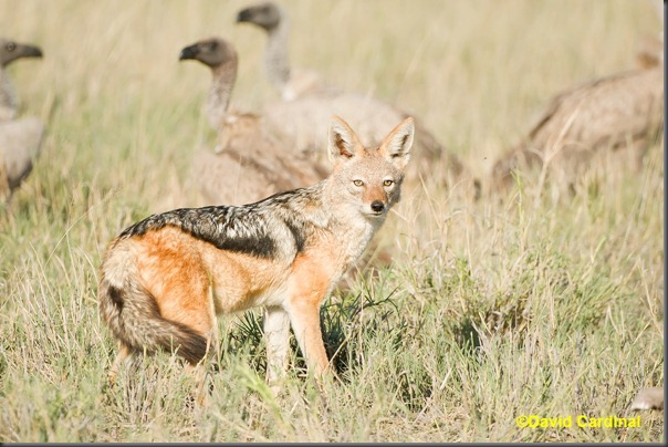 """Finally, we got a great """"portrait"""" shot of the Jackal to cap off our exciting bit of action"""