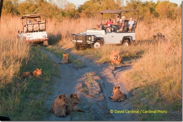 Ev_AfricaMay2011_0632