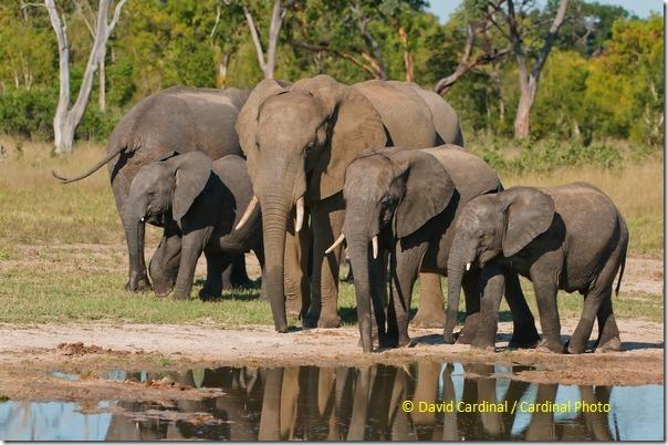 Ma_Elephant_4063