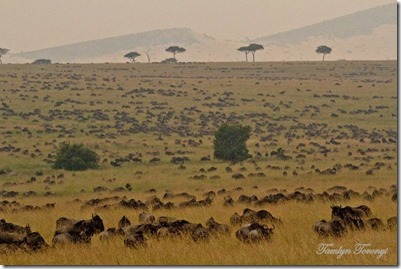 Serengeti Camp Image from Fall 2012 2