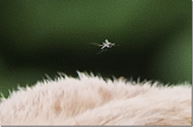 _djc9483mosquito