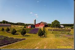 pl_lavenderfarms_0037