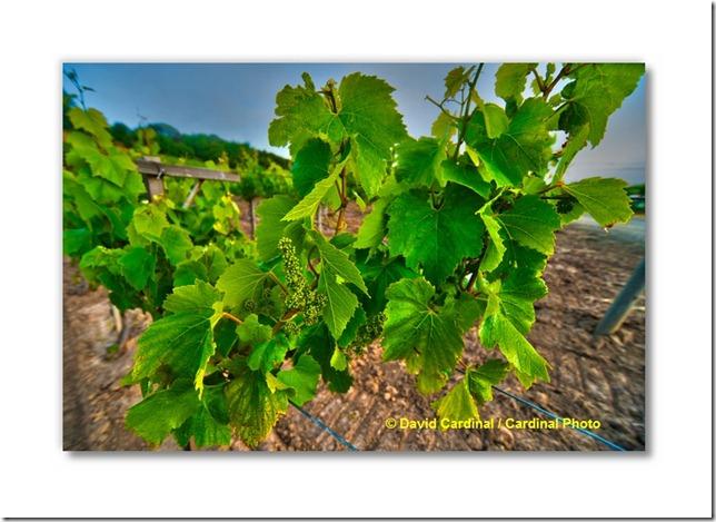 pl_pv-vineyard_0143