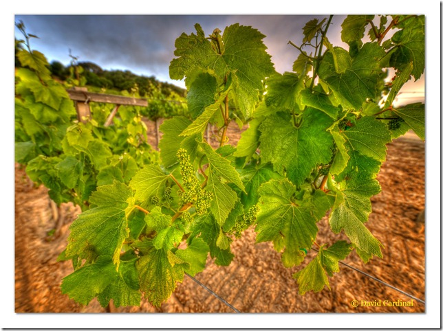 pl_pv-vineyard_0144_2_3_tonemapped-1