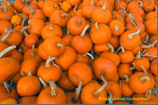 th_pumpkins_0021