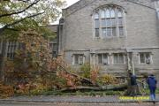 Tree blown over by Hurricane Sandy on Princeton University Campus