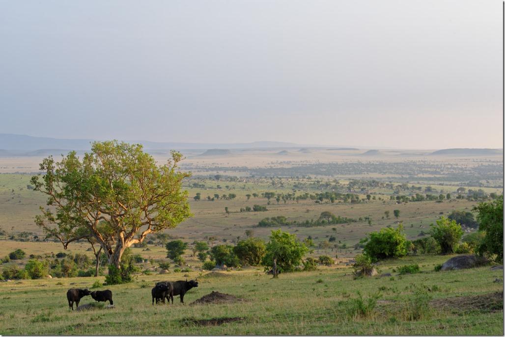 Pl_Serengeti_0036_CV26