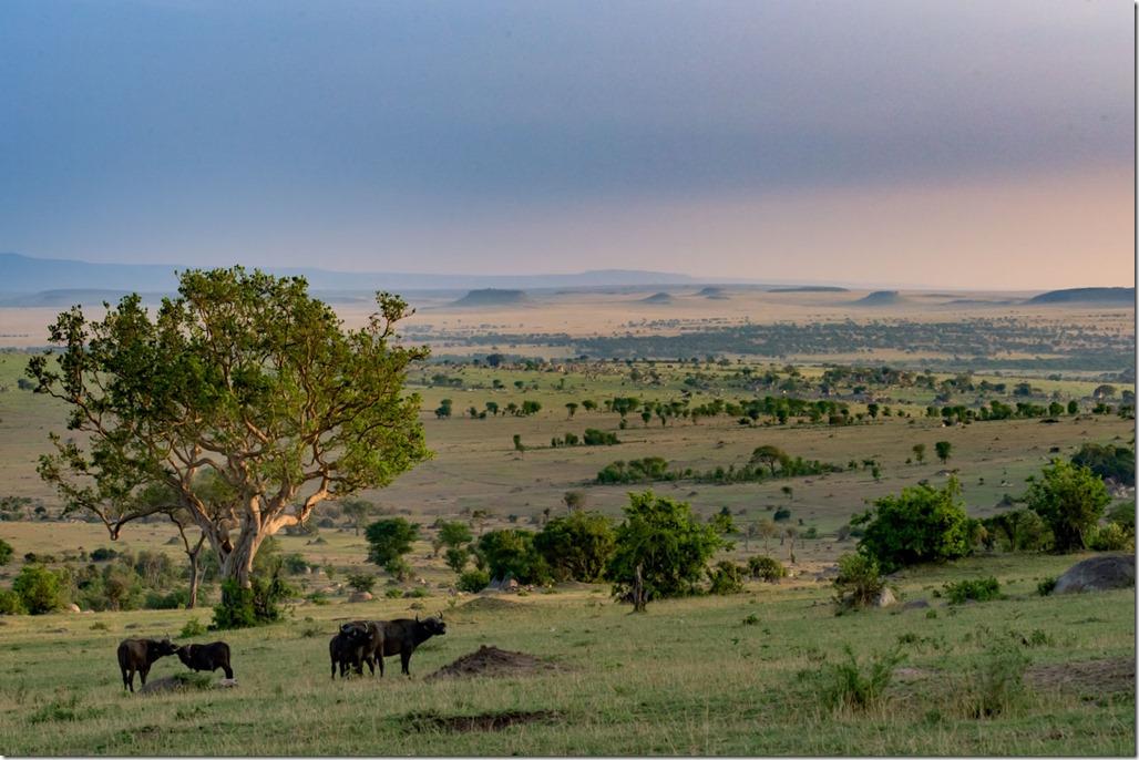 Pl_Serengeti_0036_psdehaze_