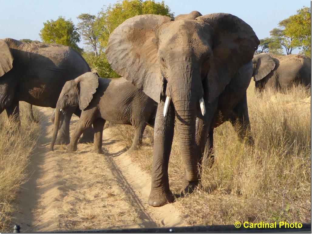 ma_elephant_0284