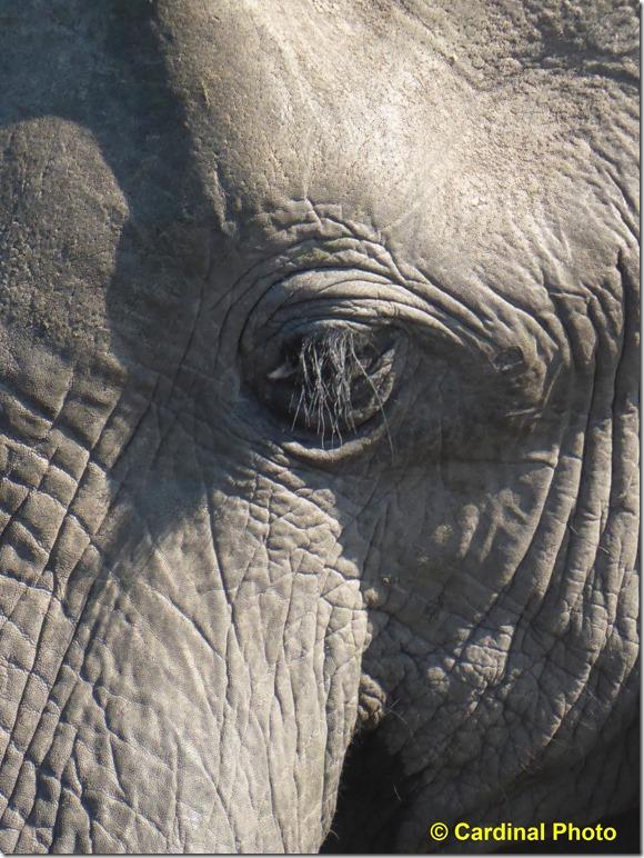 ma_elephant_0519