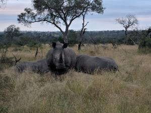 Family group of White Rhino captured with a Google Pixel 2